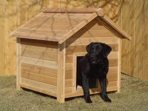 מלונה לכלב (3)