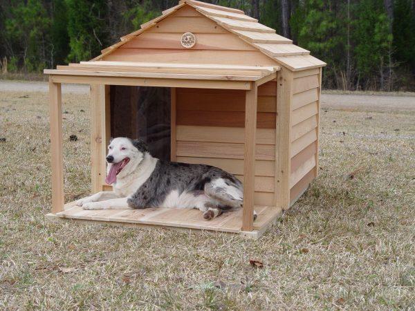 מלונה כלב גדול
